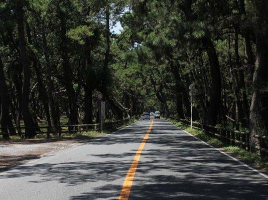 Niji No Matsubara Pine Grove