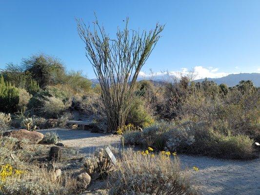 The Living Desert Zoo and Gardens