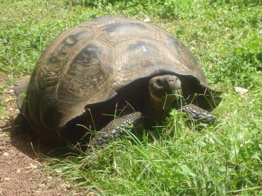 El Chato - Giant Tortoise Reserve