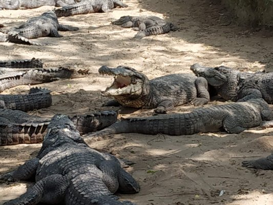 The Madras Crocodile Bank Trust and Centre for Herpetology