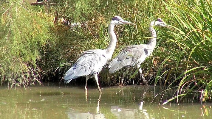 Ornithological Park of Pont de Gau