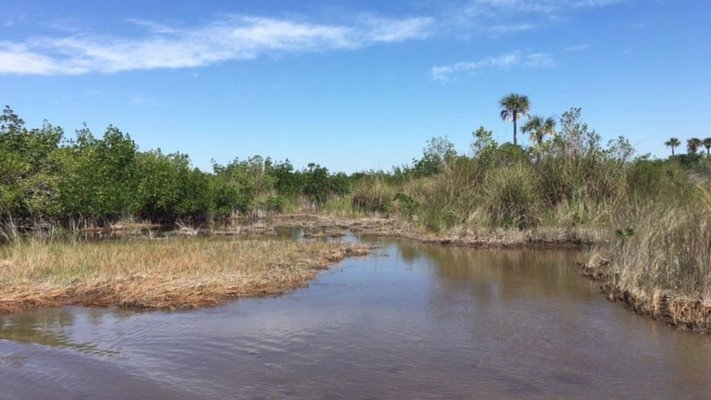Wooten's Everglades Airboat Tours