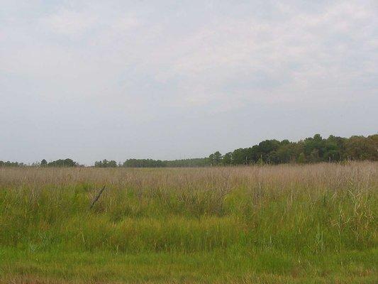 Ferry Meadows in Nene Park