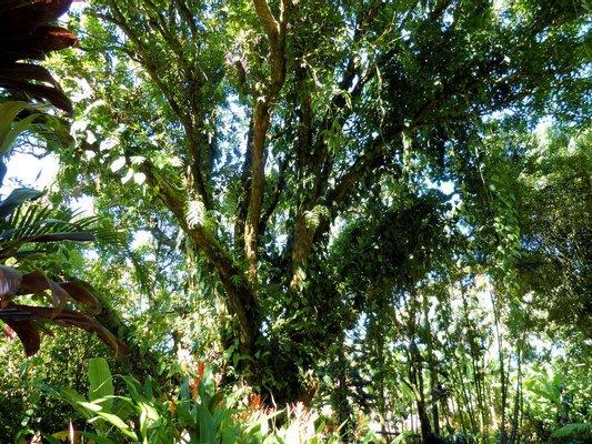 Garden of Eden Arboretum