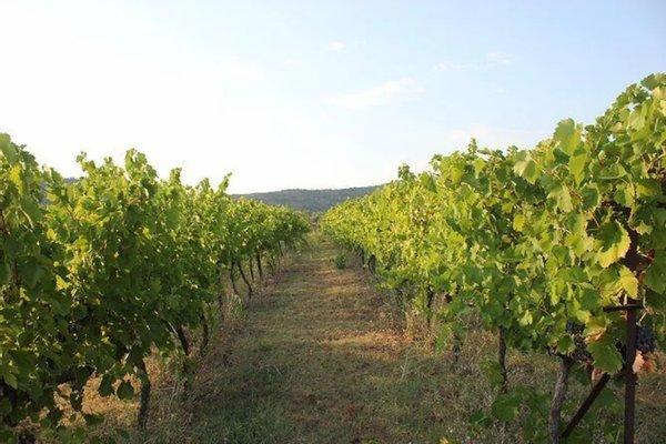 Çobo Winery