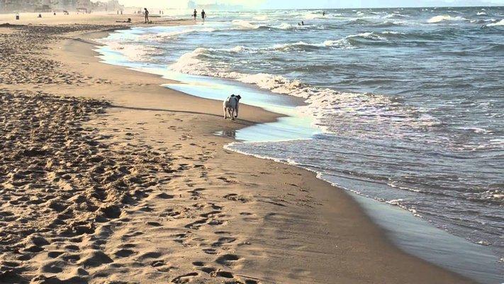 Gran pipi-can Playa de Gandia