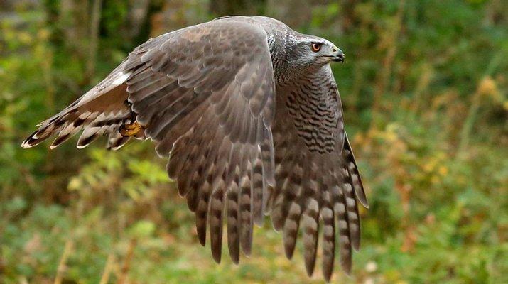 Loch Lomond Bird of Prey Centre