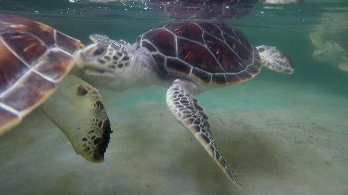 Mahamodara Sea Turtle Hatchery Centre, Galle