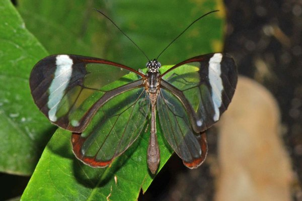 The Butterfly Farm Aruba N.V.