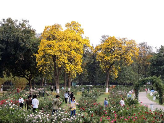Rose Garden (Chandigarh)