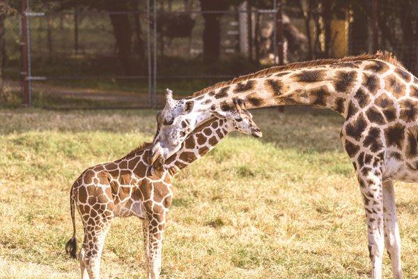 Dickerson Park Zoo