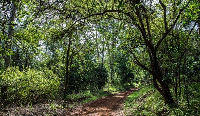 Sigiria - Karura Forest