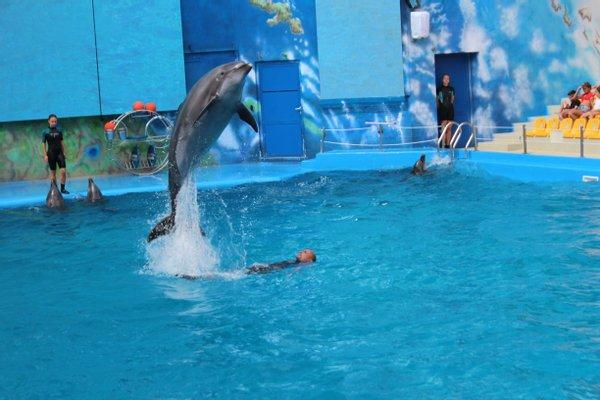 Odesa Dolphinarium Nemo
