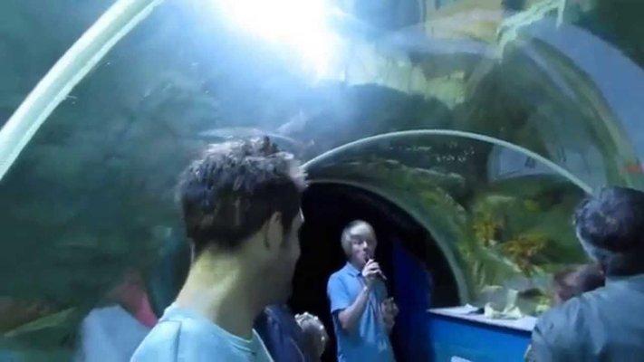 Sealife Adventure