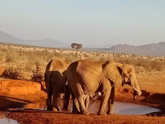 Tsavo National Park East