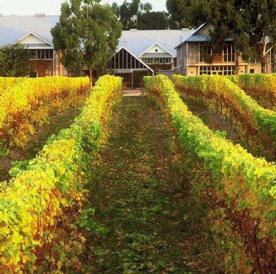 Cloudy Bay Vineyards