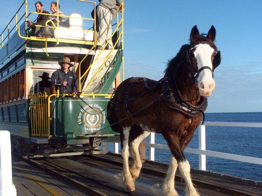 Victor Harbor Horse Drawn Tram