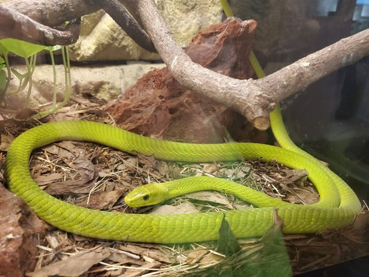 The Reptile Discovery Center