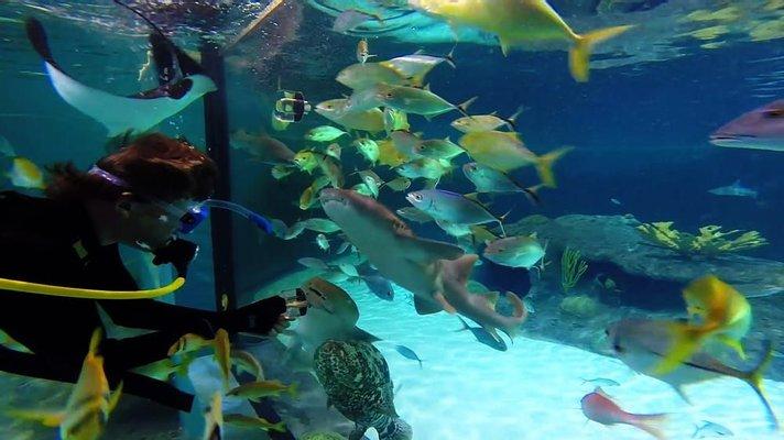 Florida Keys Aquarium Encounters