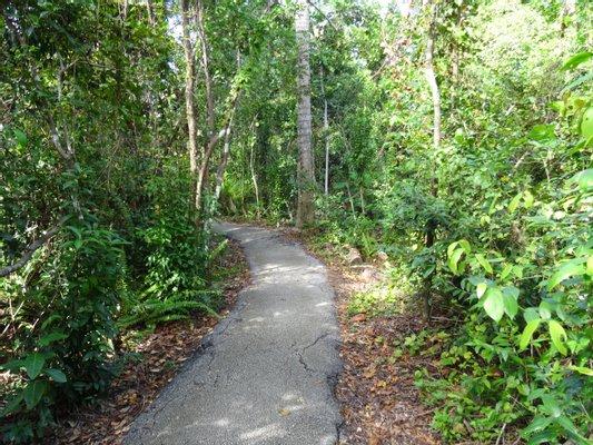 Anhinga Trail