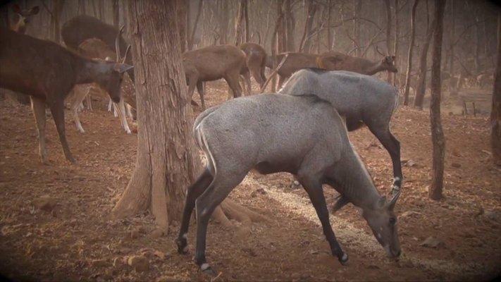 Satmaliya Deer Park