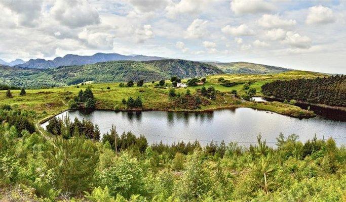 Gwydir Forest Park