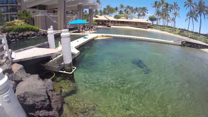 Dolphin Quest Hawaii - Swim with Dolphins