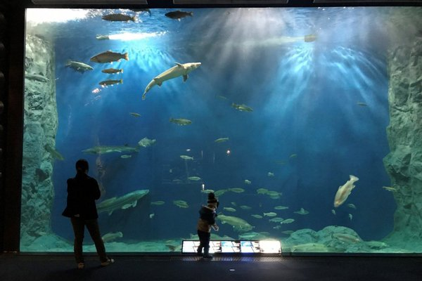 Salmon Hometown Chitose Aquarium