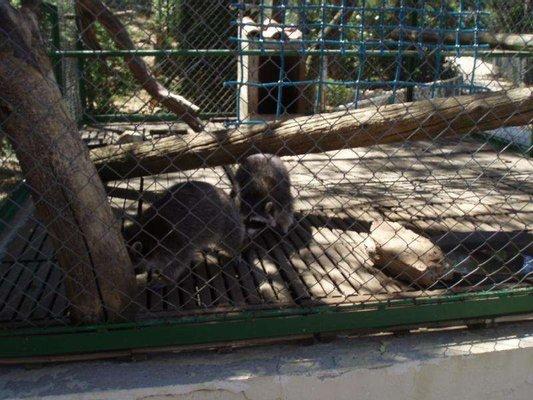Zoo Fauverie Du Mont Faron