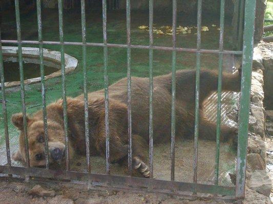 Salto Municipal Zoo