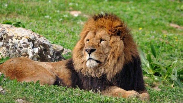 Parque Zoológico de León