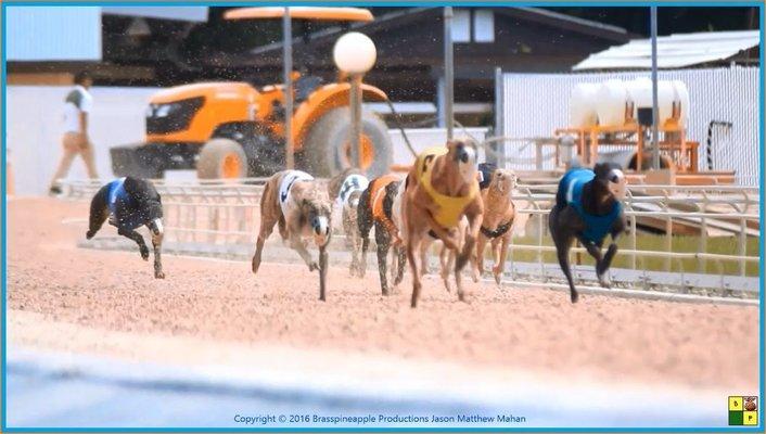 Naples - Ft. Myers Greyhound Track