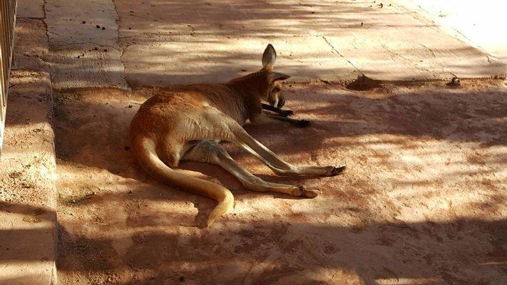 Josephine's Gallery and Kangaroo orphanage