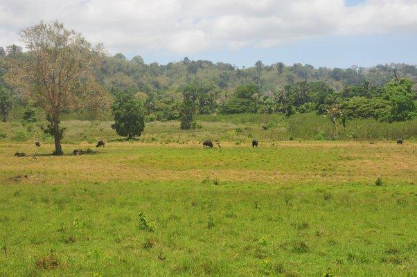 Kantor Balai Taman Nasional Alas Purwo