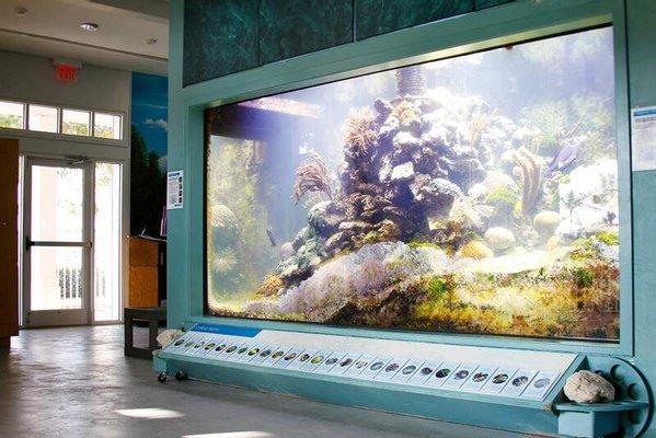 Smithsonian Marine Ecosystems Exhibit