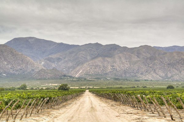 Museum of the Vine and Wine of Cafayate, Salta, Argentina
