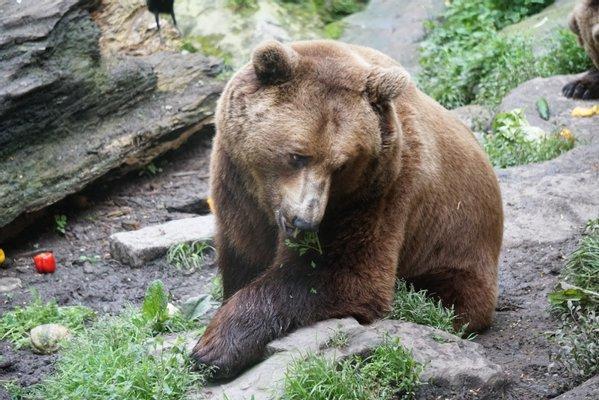 Alpine Zoo Innsbruck
