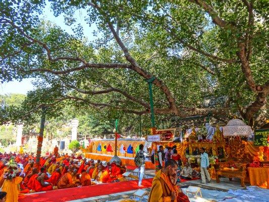 Bodhi tree Bodhgaya Bihar