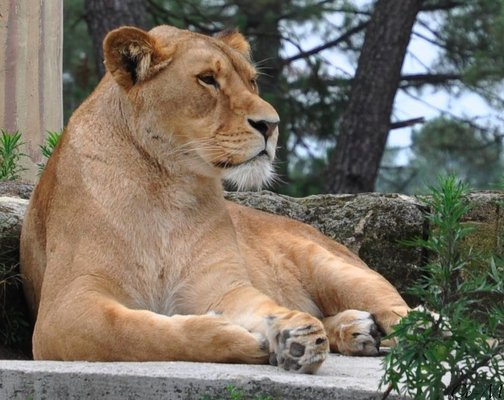 Zoo Arcachon Basin