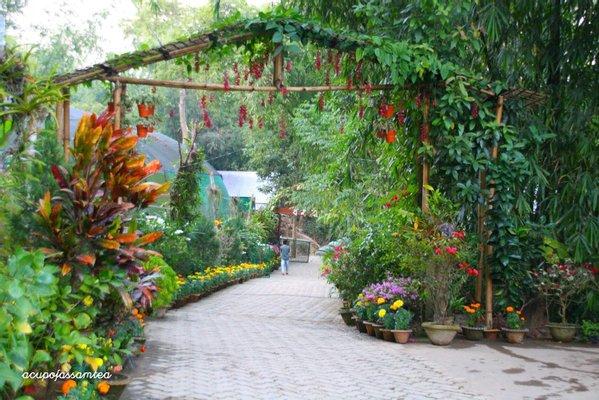 Kaziranga National Orchid and Biodiversity Park