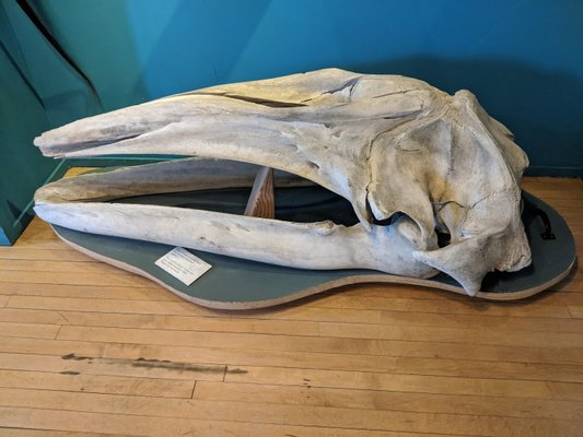 The Whale Museum - Completely Reopened