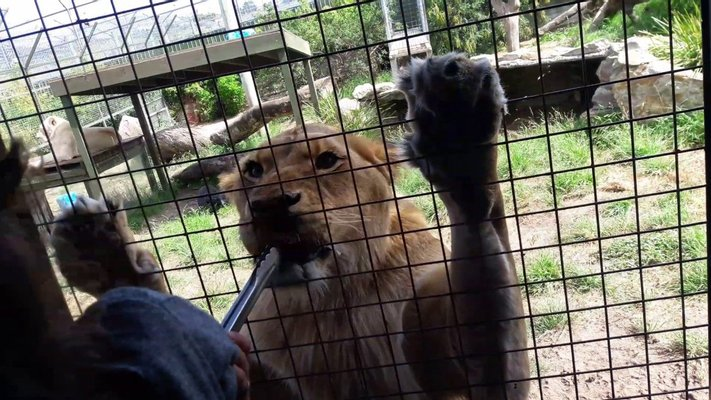 Zoodoo Zoo