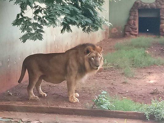 Bosque Zoo Fábio Barreto