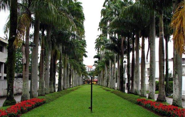 R. das Palmeiras - Centro