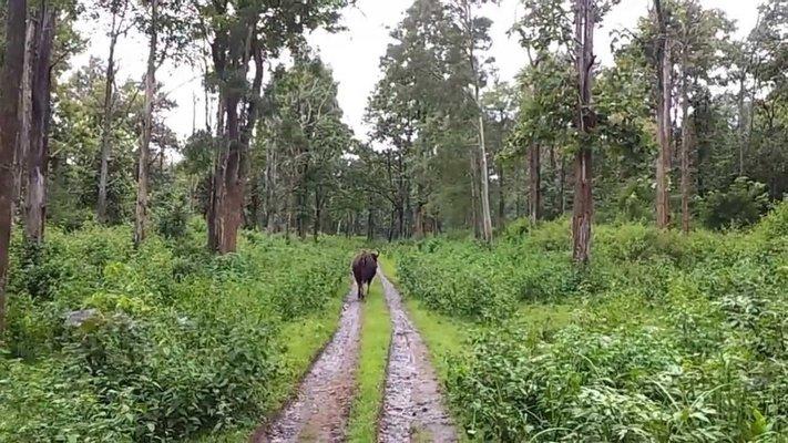 Wayanad Wildlife Sanctuary, Tholpetty
