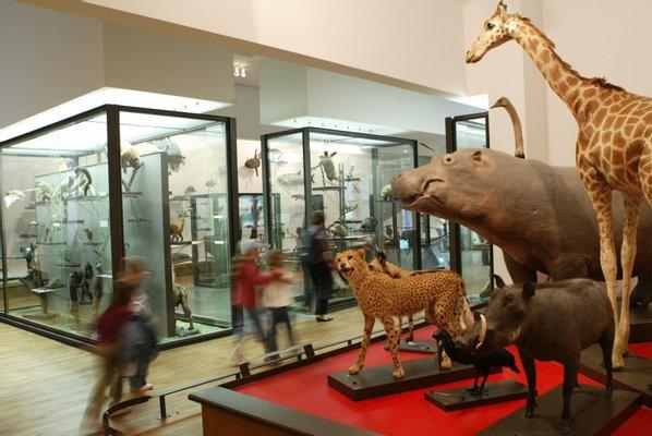 Nancy Museum-Aquarium