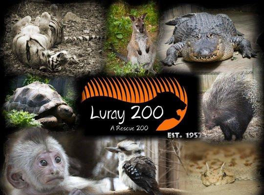 Luray Zoo A Rescue Zoo