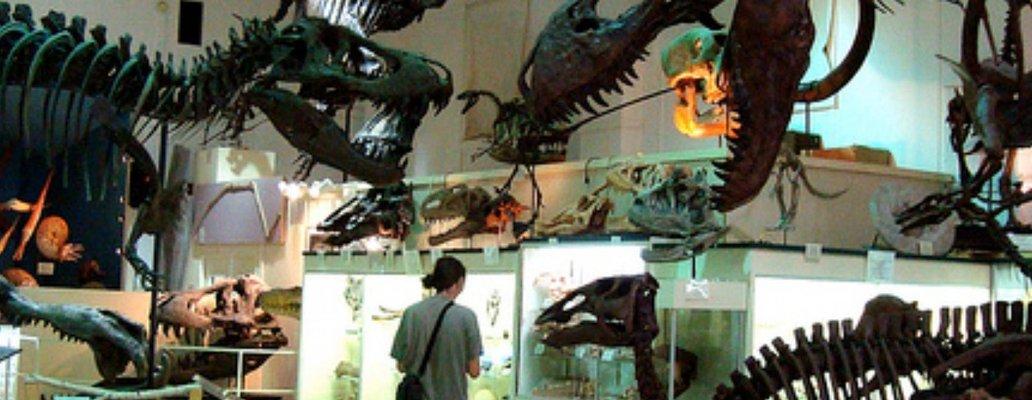 Museum @ Black Hills Institute