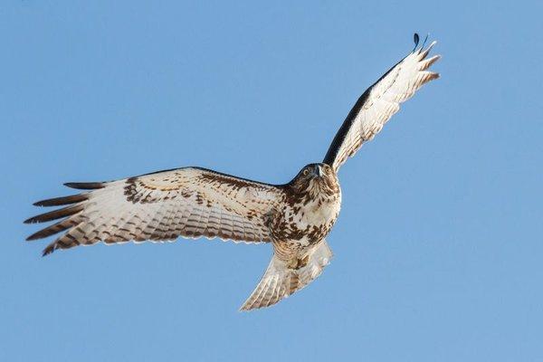 Andy Howey Birds of Prey