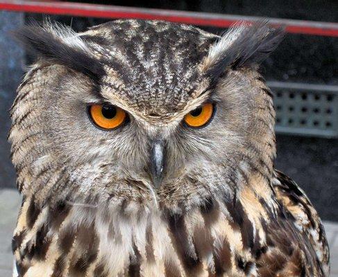 Owl & Bird Of Prey Sanctuary